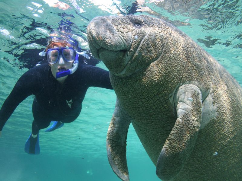 face-to-face interaction with manatees
